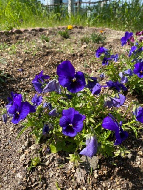 エイト花壇