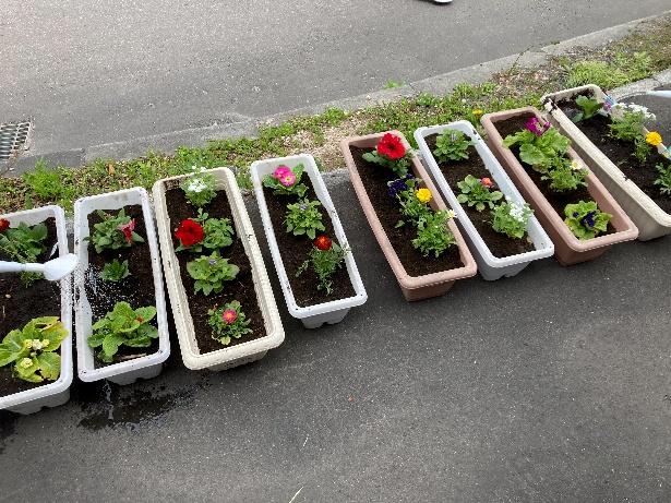 花植え:エルフィンホーム